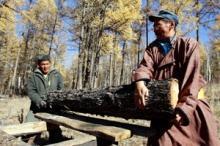 Protección a los bosques para conservar los medios de subsistencia - Un proyecto de la FAO en Mongolia destaca la participación comunitaria