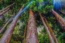 Better data, better decisions, better forests