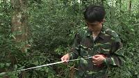 Desarrollando un inventario forestal Nacional innovador en Vietnam
