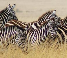 Wildlife partnership releases fact sheet on sustainable wildlife management and biodiversity