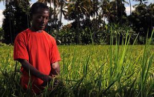 L'agriculture intelligente face au climat pourrait déboucher sur un renouveau rural