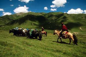 La FAO y sus socios chinos trabajan para conseguir financiación del carbono para ganaderos y pastores