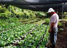 Agricultores familiares de la zona sur de Costa Rica producen mediante sistemas de agricultura climáticamente inteligente