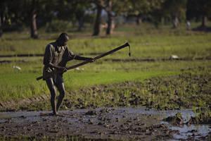La agricultura es clave para la seguridad alimentaria del Caribe y para enfrentar el cambio climático