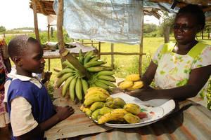 L'agriculture intelligente face au climat prend racine au Kenya