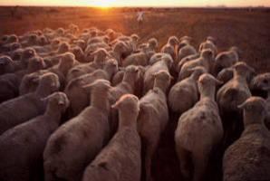 Major cuts of greenhouse gas emissions from livestock within reach