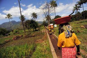 New approaches to food systems needed to cope with climate change