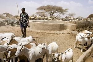 Stort finansieringsbehov för jordbruket på Afrikas horn