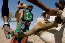 Möte om grundorsakerna bakom hungersnöden Afrikas horn
