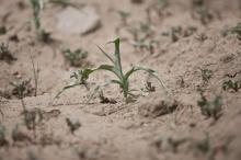 Hjälp till östra Afrika, nu och i framtiden