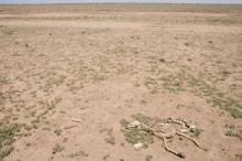 Hungersnöd i Somalia