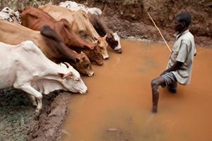 Hjälp Afrikas horn