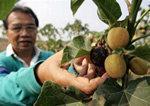 FAO avslöjar nya redskap för att trygga tillgången till mat