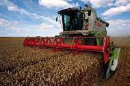 Betydande ökning av världens spannmålsproduktion förutspås för 2008
