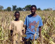 Extremt torrt väder förvärrar livsmedelssituationen i Zimbabwe