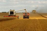 I de fattigaste länderna fortsätter spannmålsräkningarna att stiga, regeringar försöker att begränsa inverkan