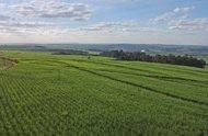 Storskalig produktion av biobränsle kan öka marginaliseringen av kvinnor