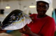 Handeln med fiskprodukter expanderar