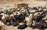 FAO ger assistans till krigsdrabbade bönder i södra Libanon