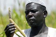 Höga matpriser gör Afrikas jordbruk än viktigare