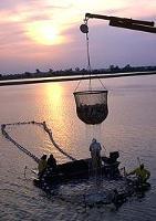 Klimatförändringar drabbar fisket