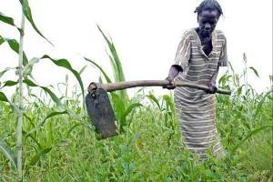 Odlingar påbörjade i Burkina Faso