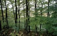 Hur påverkar klimatförändringarna skogen och vårt skogsbruk?