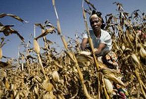 Världshungerdagen 2008 riktar uppmärksamheten mot hur fattiga påverkas av klimatförändringar och bioenergi