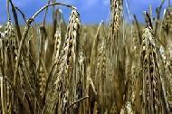 Trots rekordskörd väntar problem för jordbruket