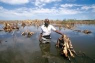 Jordbruket och skogsskötseln kan motverka klimatförändringarna