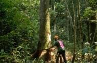 Skogssektorn antar utmaningen från klimatförändringarna