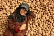 """Den ekonomiska krisen hotar """"potatisboomen"""""""