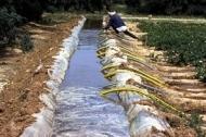 Konstbevattning är nyckeln för tryggad tillgång till mat i Afrika