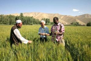 2008 års skördeavkastning rekordstor men matpriserna fortsatt höga i utvecklingsländerna