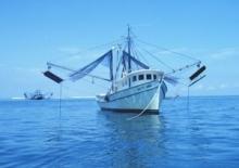 Räkfisket granskas