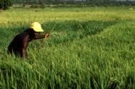 FAO hjälper invandrare att investera i hemländerna