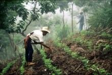 FAO: Inkludera bönderna i klimatförhandlingarna