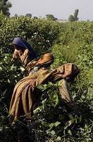 Bioenergi kan gynna fattiga på landsbygden