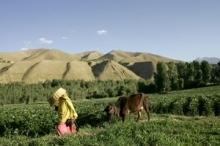 En framgångssaga från Afganistan