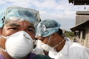 FAO agerar på den mänskliga krisen orsakad av H1N1-viruset