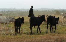 Nya riktlinjer för boskap i krissituationer