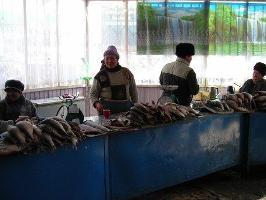 Finland stödjer FAO:s fiskeprogam i Kirgistan med 1,76 miljoner euro
