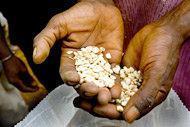 Massivt EU-stöd till insatser för att trygga tillgången till mat