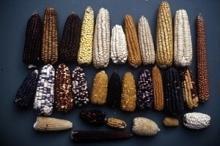 De första frukterna från avtalet om växtgenetiska resurser