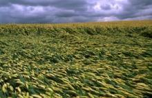 Den globala matmarknaden stabiliseras sakta