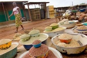 Matpriserna fortsätter att stiga trots rekordskördar