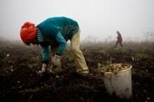 FAO startar upp diskussion kring deklaration inför Världstoppmötet om tryggad tillgång till mat