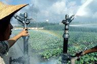 Jordbruket – en nyckelroll för mer effektiv vattenanvändning