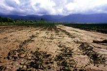 Jordbruket sårbart för klimatförändringen