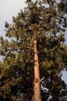 Skogens roll avgörande i klimatdebatten